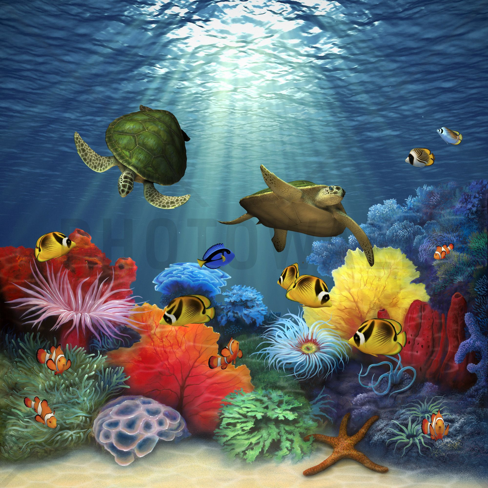 Bathroom Wall Art Canvas Artwork Nautical Coral Reef Ocean: Coral Sea - Canvas Print & Canvas Art - Photowall