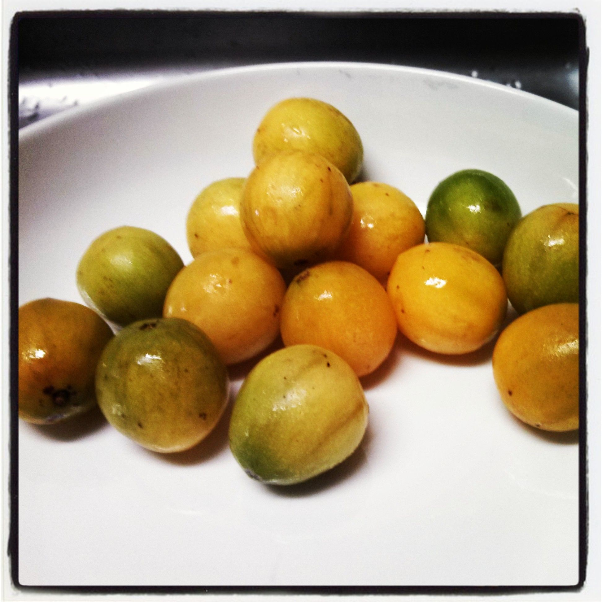 Fruta do Umbu - produzida pela arvore umbuzeiro