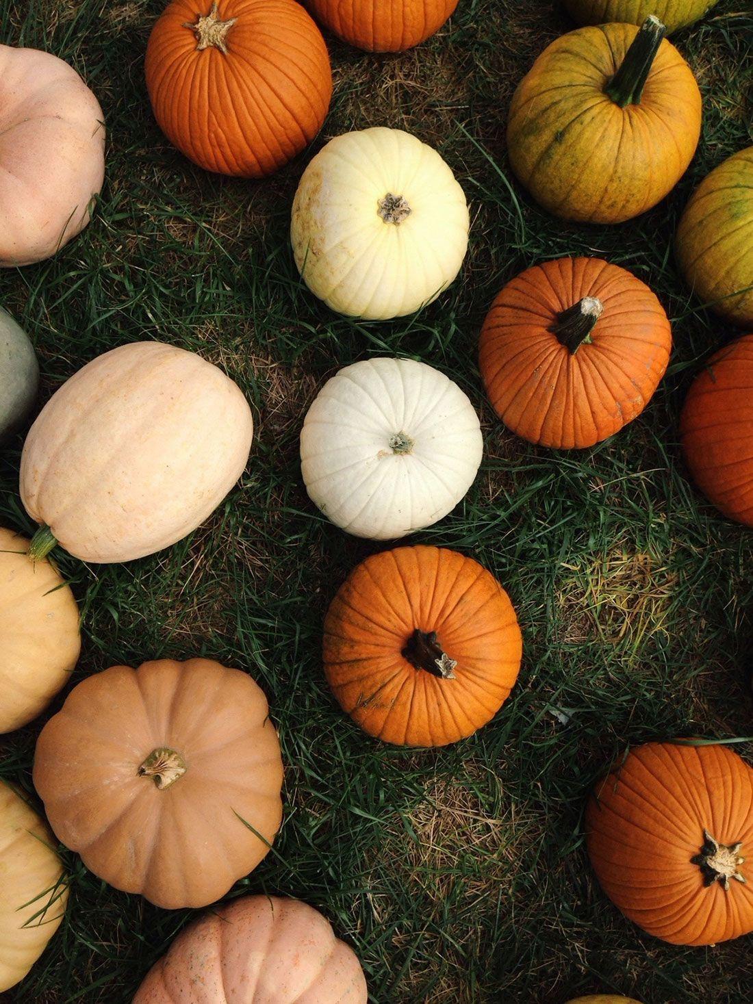 Aesthetic Halloween Backgrounds Pumpkin