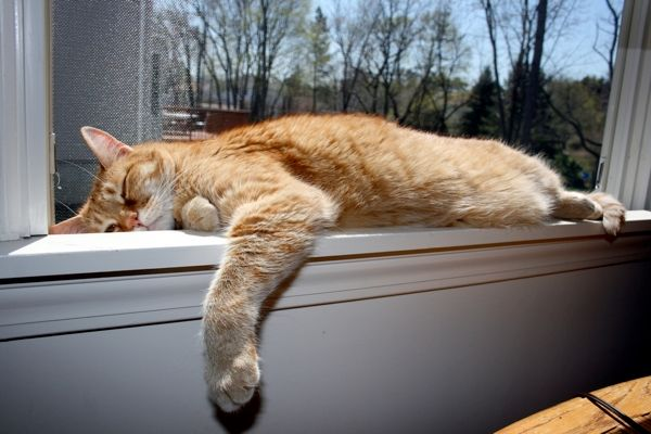 Cat napping on window sill by Shutterstock