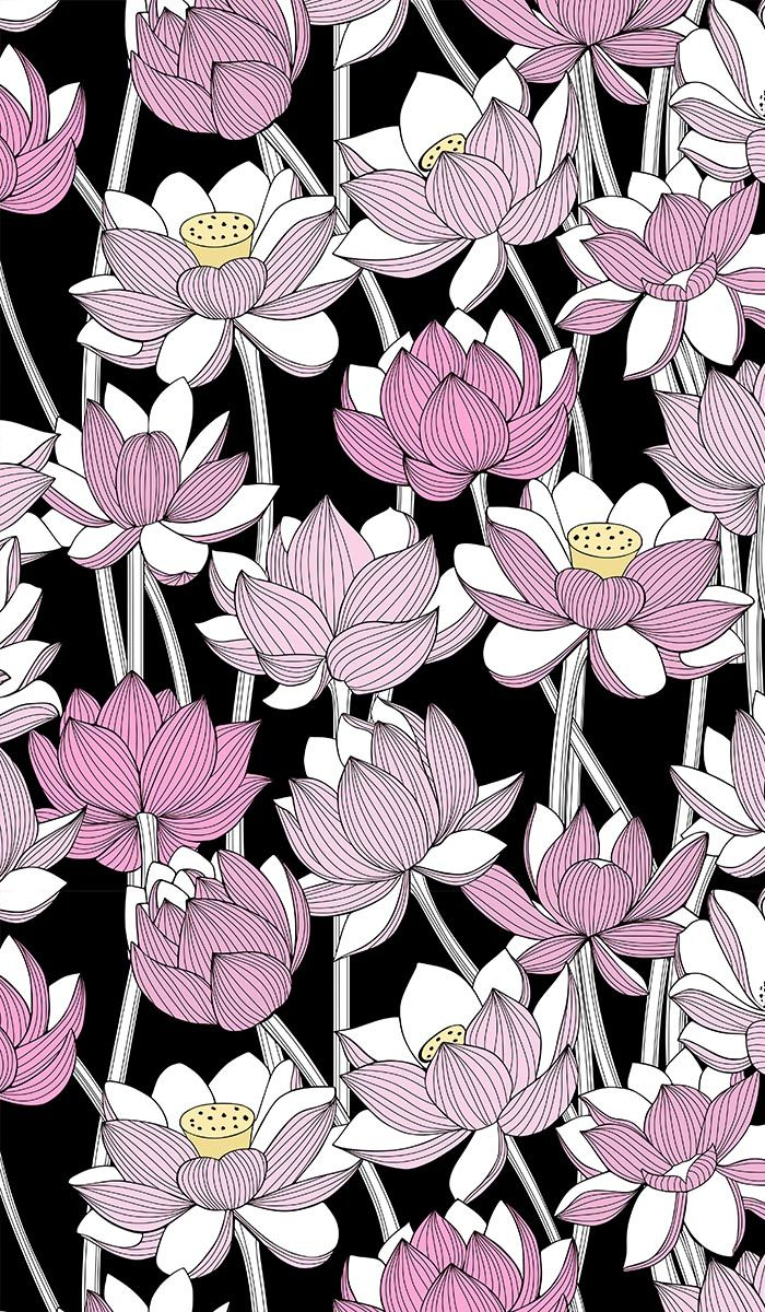 Pink lotuses on a black background. Floral print drawing ...