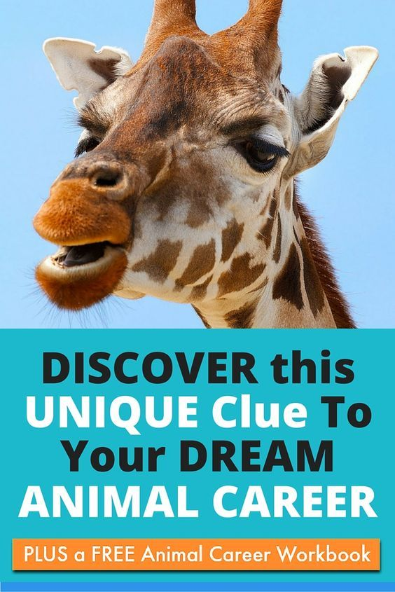 Discover A Unique Clue To Your Dream Animal Career Purpose Animal Animals Pet Businesses Jobs With Animals