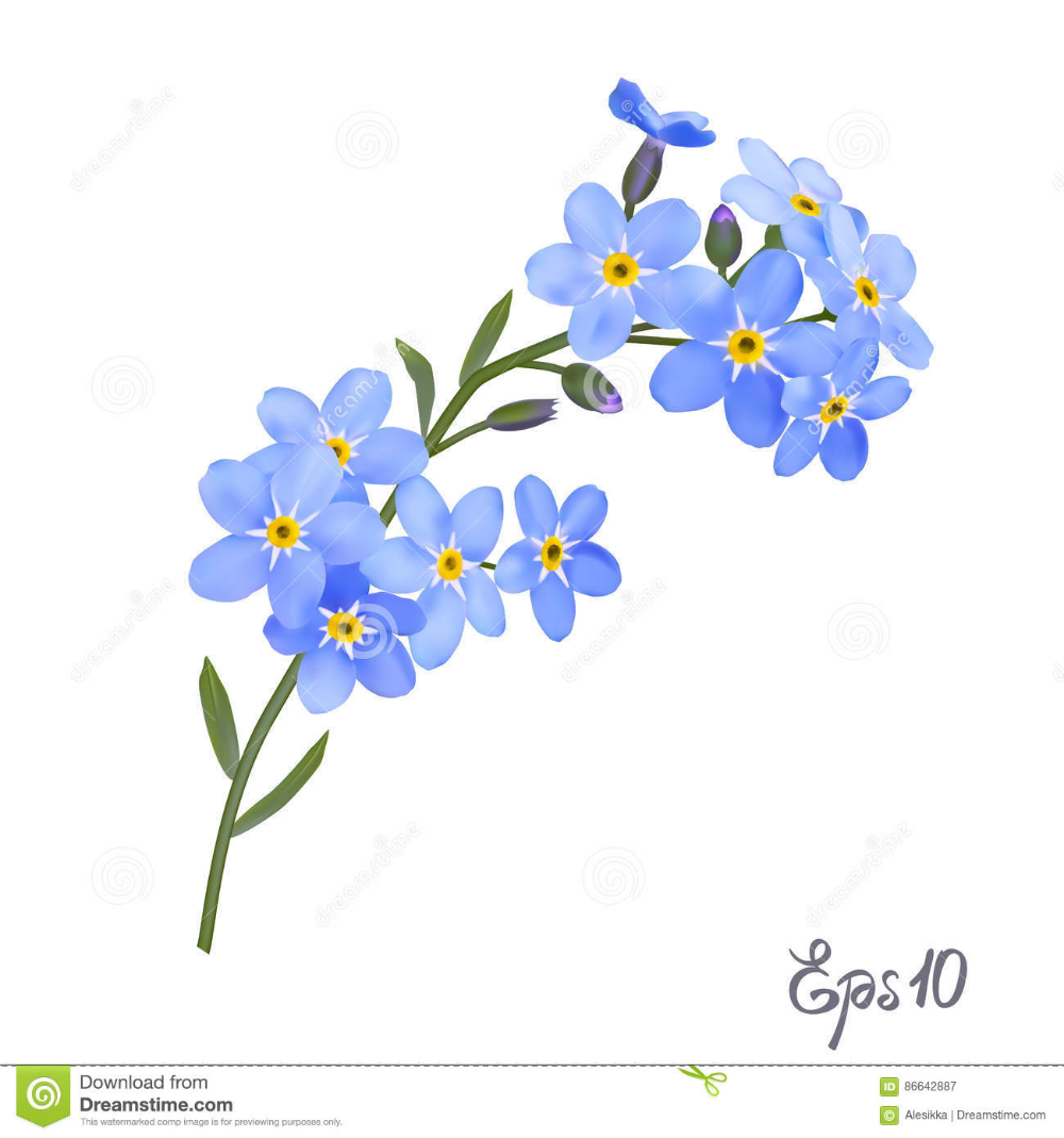 Illustration About Branch Of Blue Forget Me Not Flowers Isolated On White Background Close Up Photo Re Flower Sketches Watercolor Tattoo Flower Flower Drawing