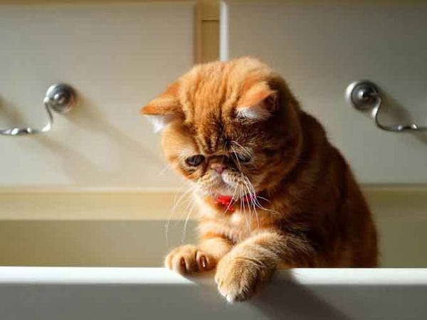 Viele Traurige Tiere Humor And Funny Stuff Cats Funny Cats Und