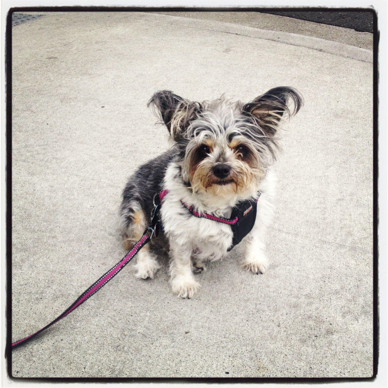 Everyone Meet Xena Doggy Furry Friend Instagram Posts