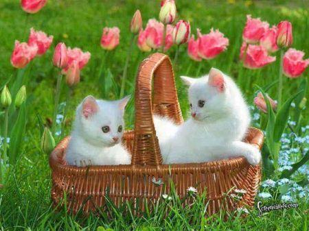 Kittens In A Tulip Garden Desktop Nexus Wallpapers Cat Garden Kittens Cat Wallpaper