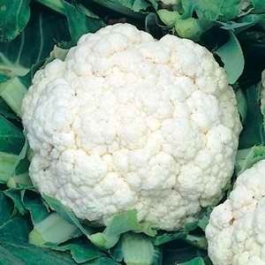 Cauliflower All Year Round Growing Cauliflower Growing