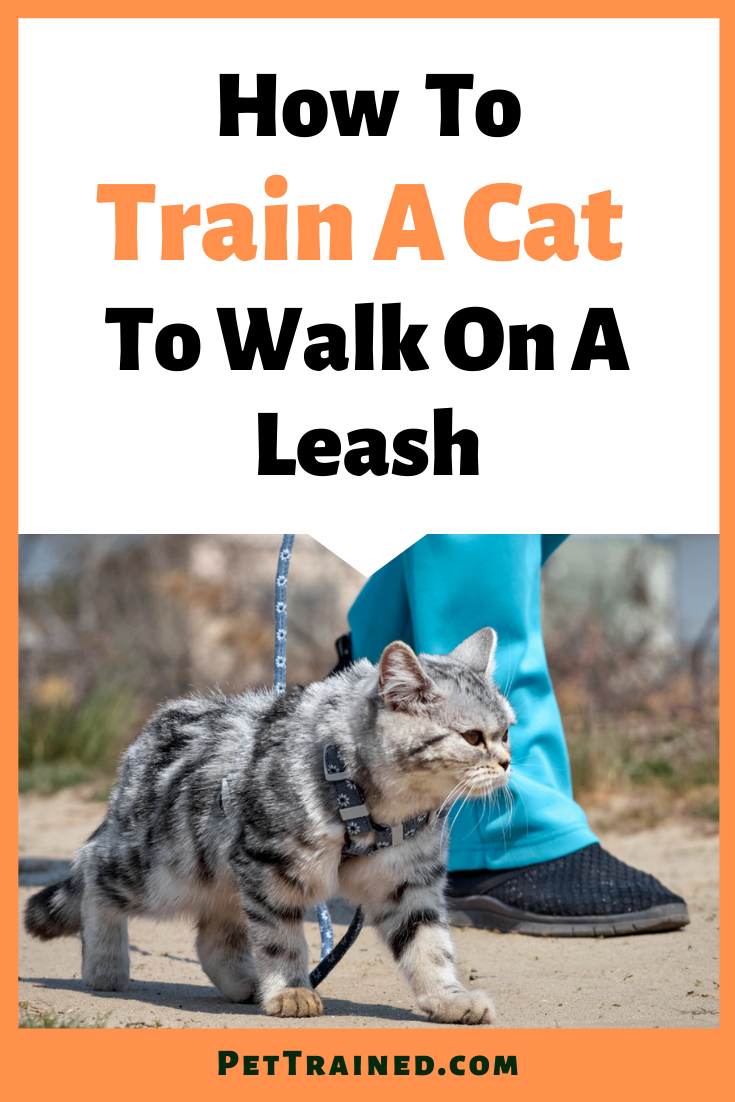 How To Train Your Cat To Walk On A Leash Outdoors Cats Cat Toilet Training Cat Leash