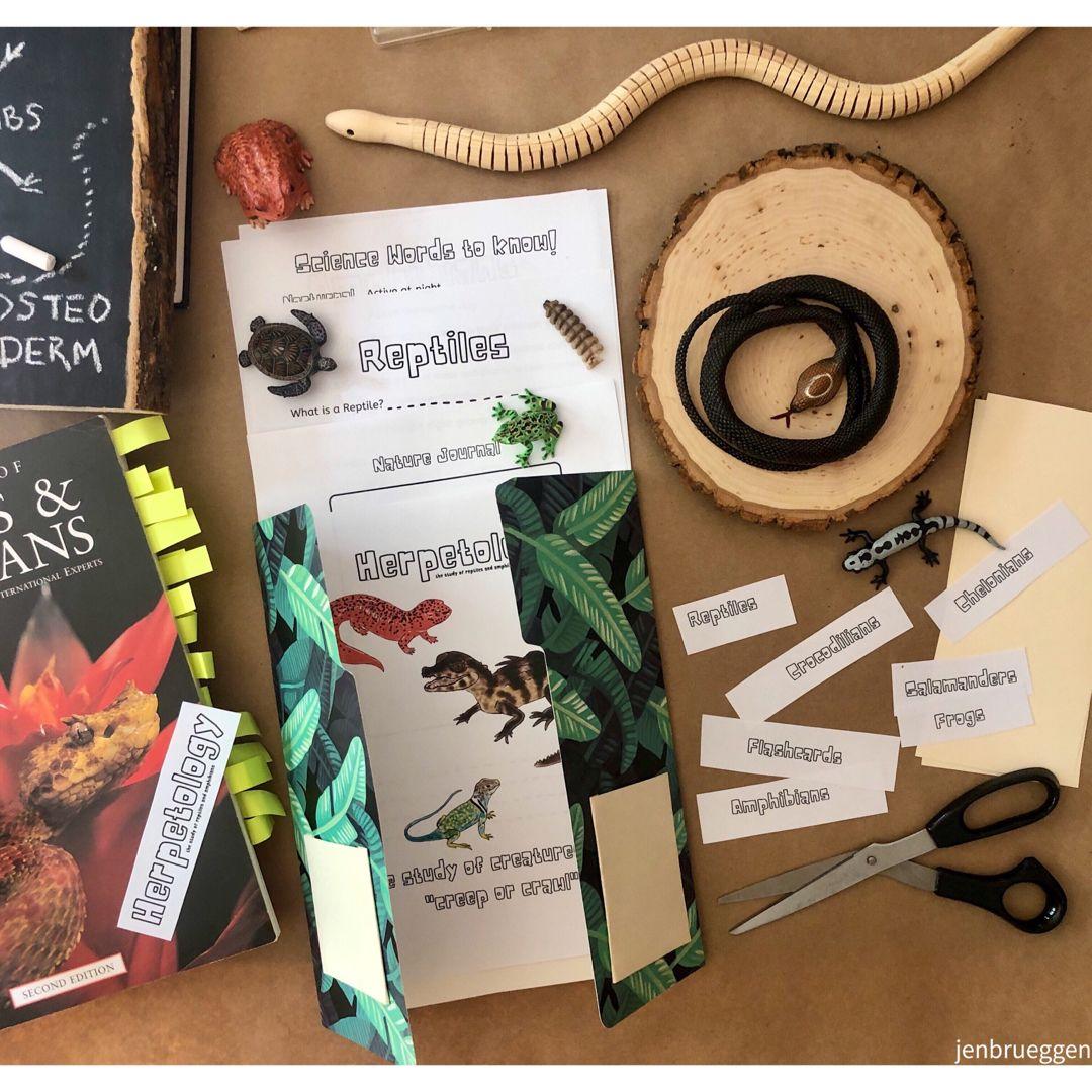 Lapbook Reptile Amp Amphibian Study In