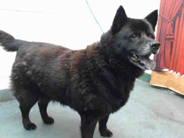 Florida Urgent Sombra Id A0716115 I Am A Senior Spayed Female