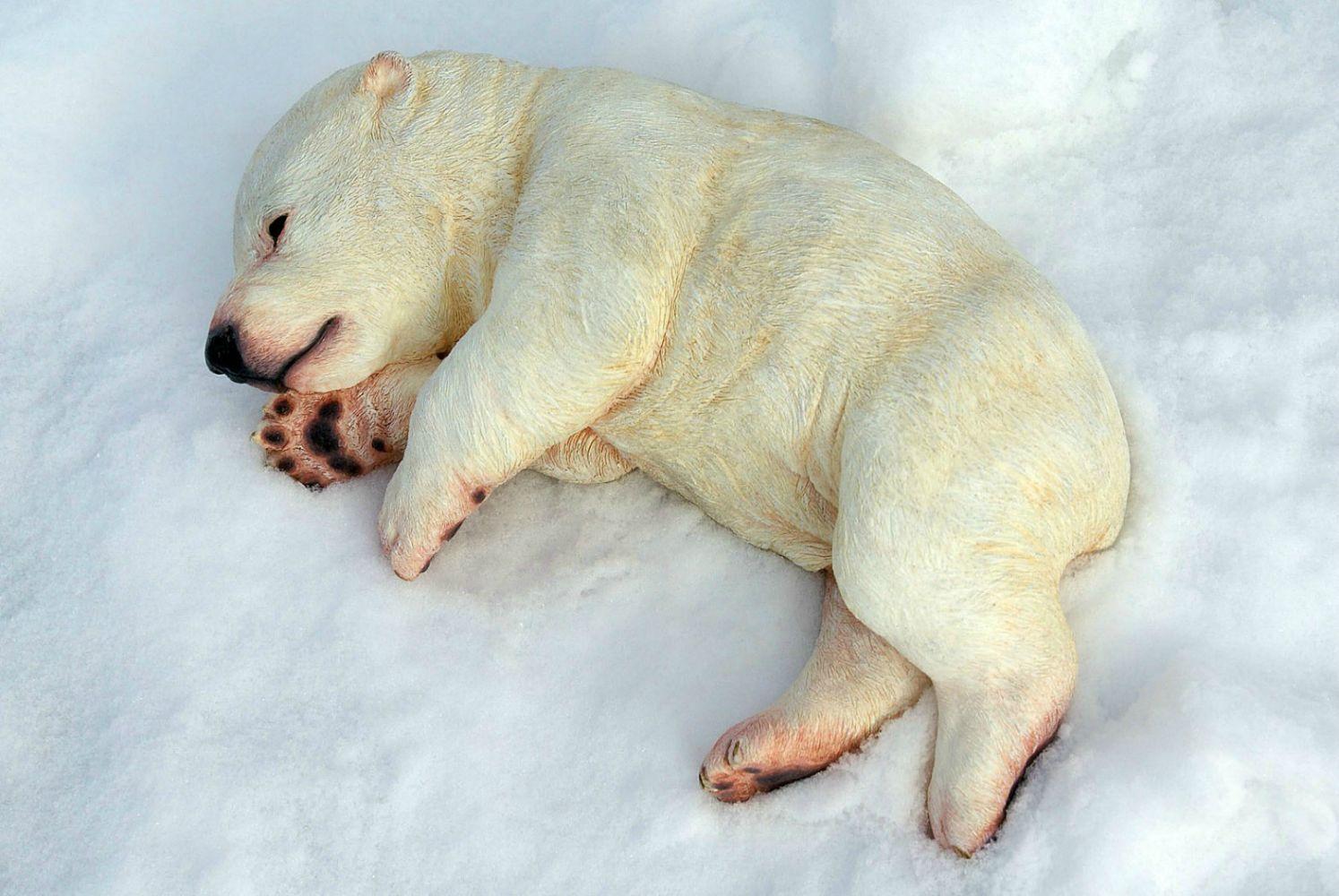 Sleeping Baby Polar Bear Sculpture For The San Diego Zoo S