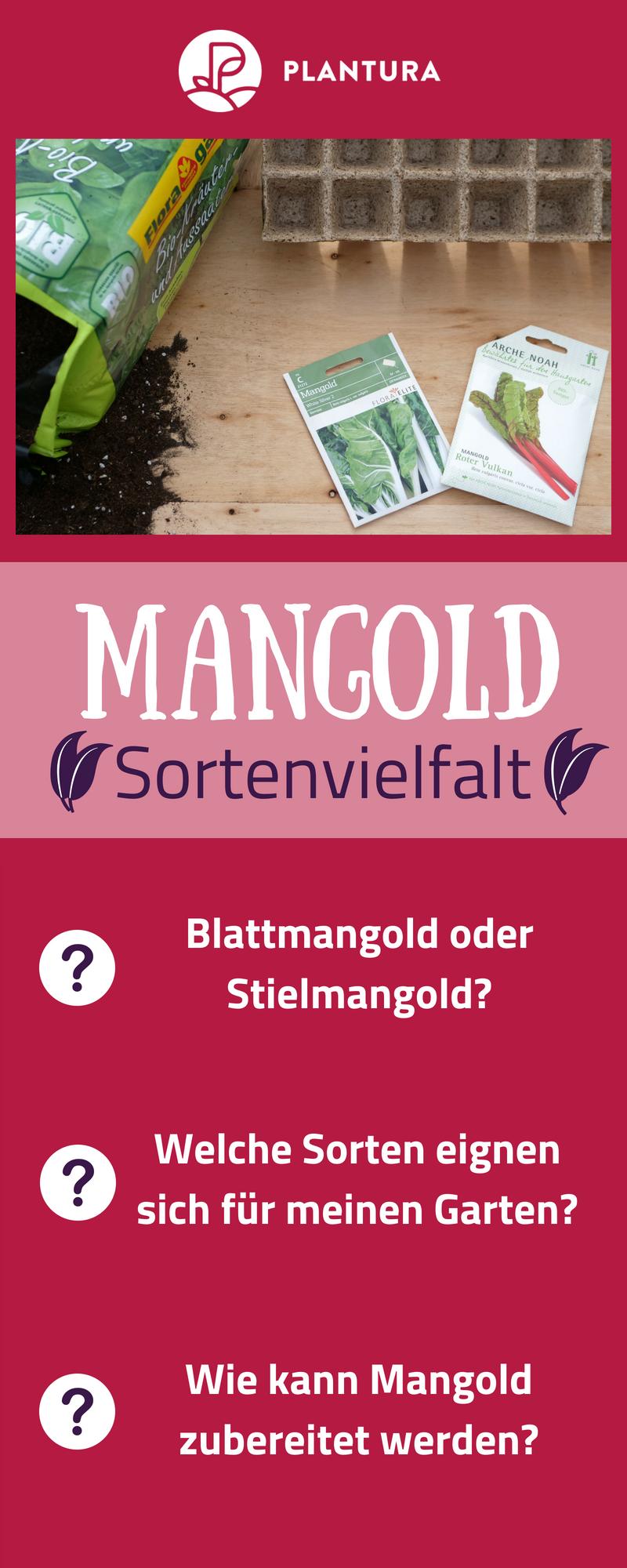 Mangold Anbauen Aussaat Pflege Und Erntezeit Garten Tipps