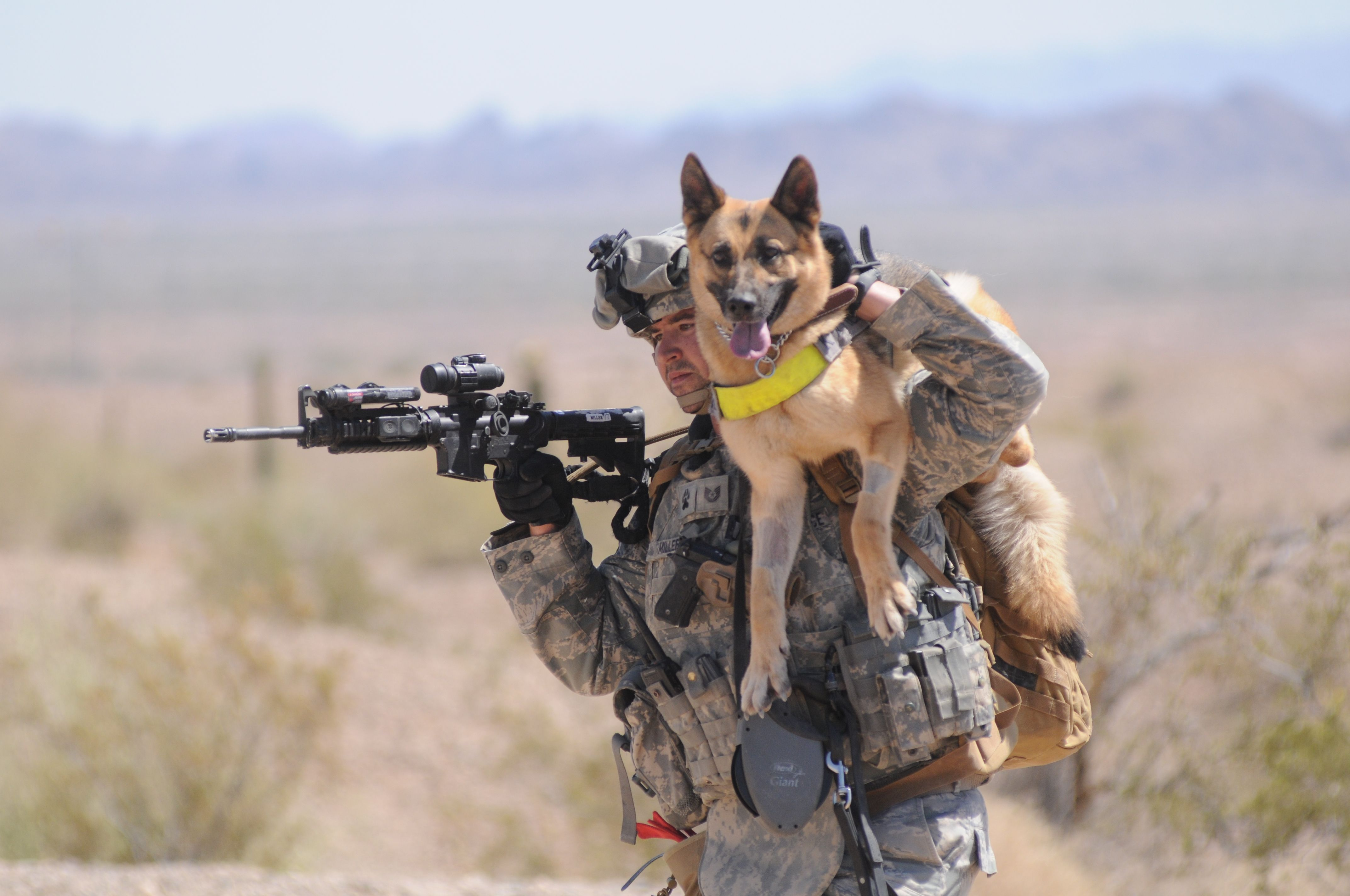 Iask Course A Soldier Dog And Handler Training Exercise In Yuma