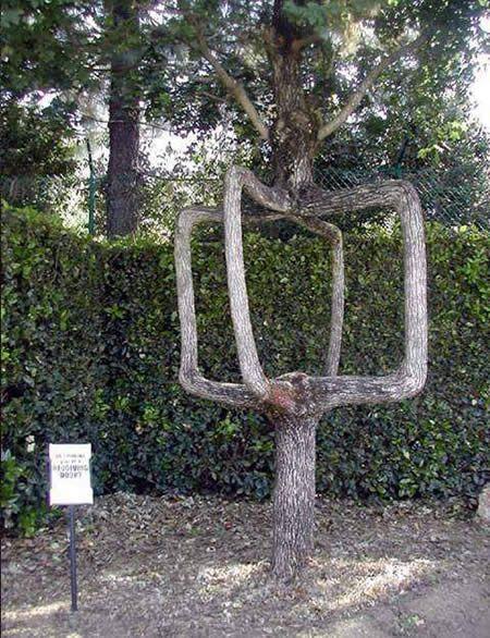 Mærkelig træ.