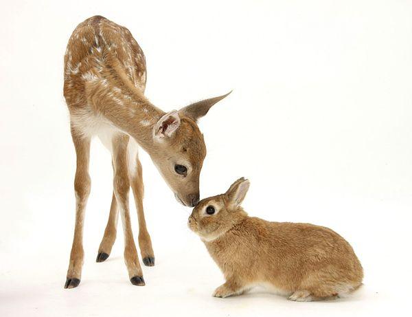 Friendship As It Is おかしな動物 かわいい動物の写真 美しい動物