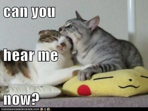 Can You Hear Me Now Silly Cats Cats Funny Animal Pictures