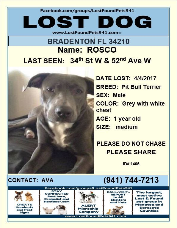 Have You Seen Rosco Lost Dog Please Rt Pitbull Lostpetservices Bradenton Fl Losing A Dog Losing A Pet Service Animal