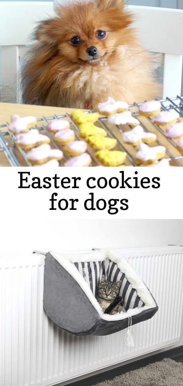 Even your furry fourlegged friend can participate in Easter festivities with dogfriendly peanut butter and pumpkin cookies Training your dog is centered on building your...