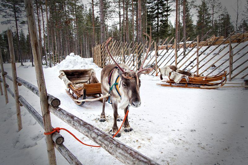 reno de Papá Noel, Laponia finlandesa