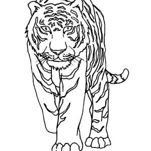 Cute Tiger Coloring Pages Reddit Designs Collections