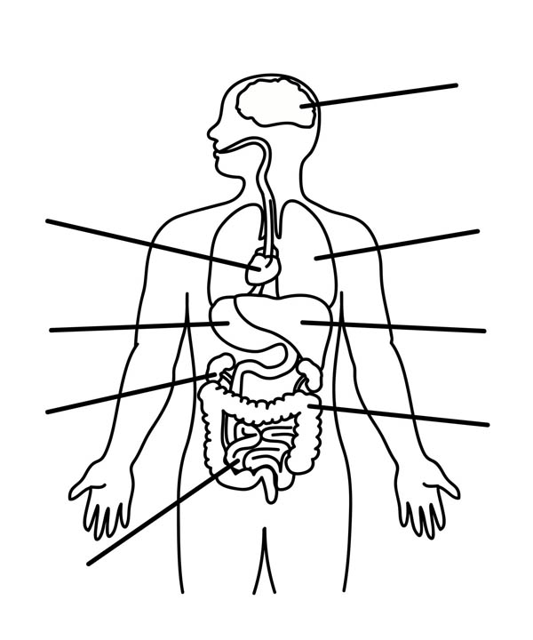Human Anatomy Organs Coloring Pages : Bulk Color (med