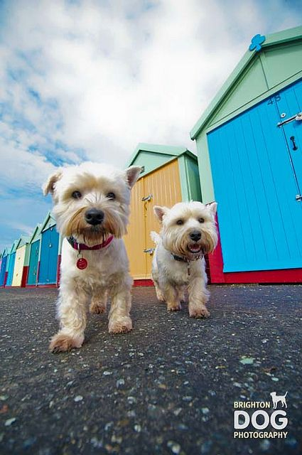 Brighton Dog Photography Holly Like Repin Share Thanks Dogs Dog Photography Dog Photoshoot