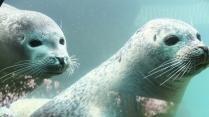 NTR | Het Klokhuis - zeezoogdieren