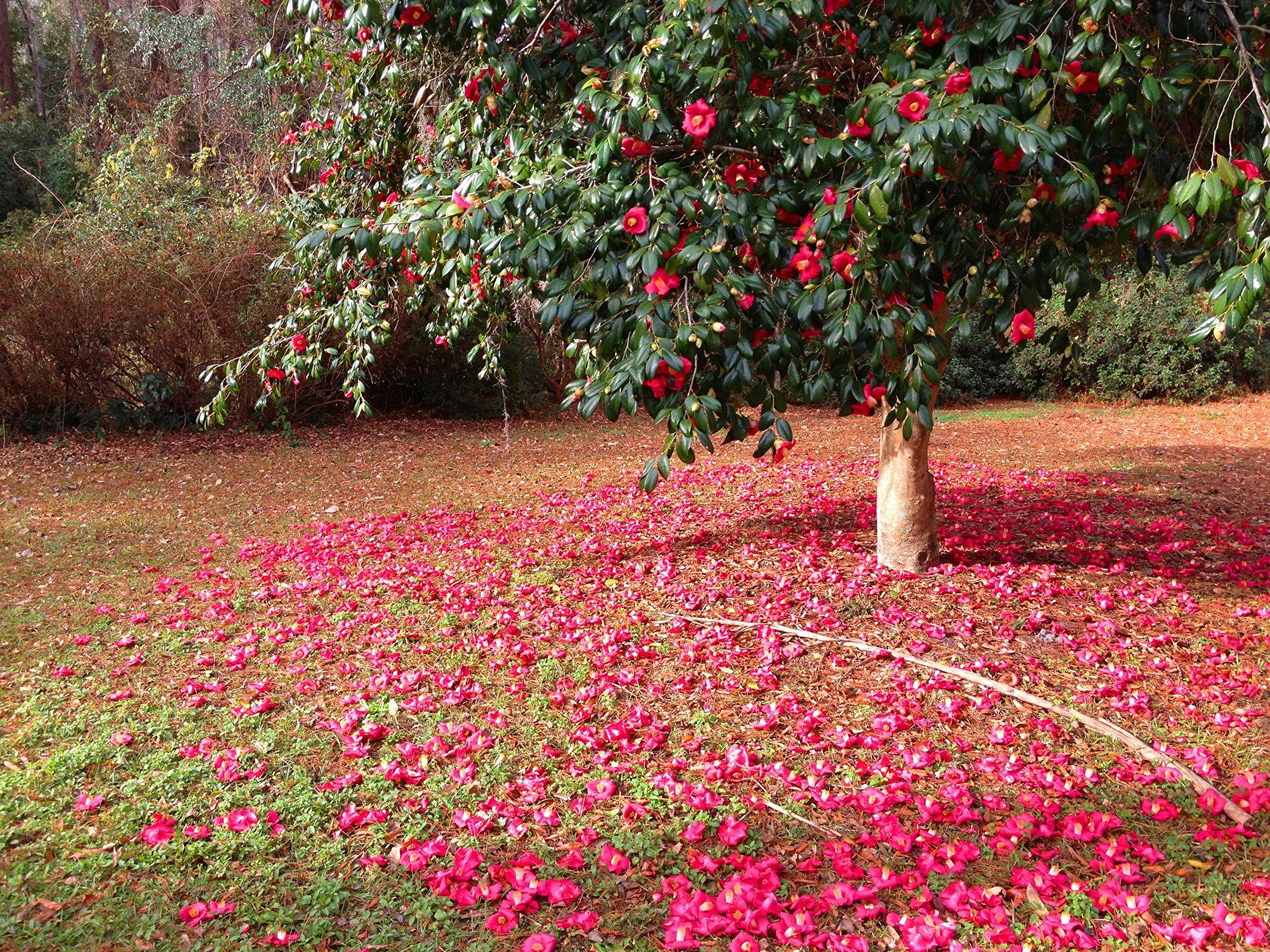 сегодняшний фото красивый розы в лес то, что вакцина