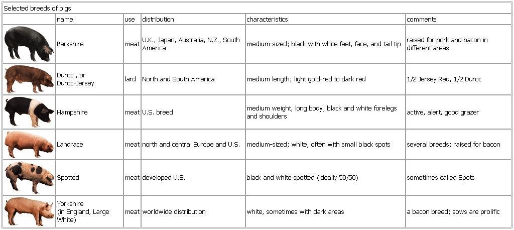 Equipment Catalog - Swine Genetics