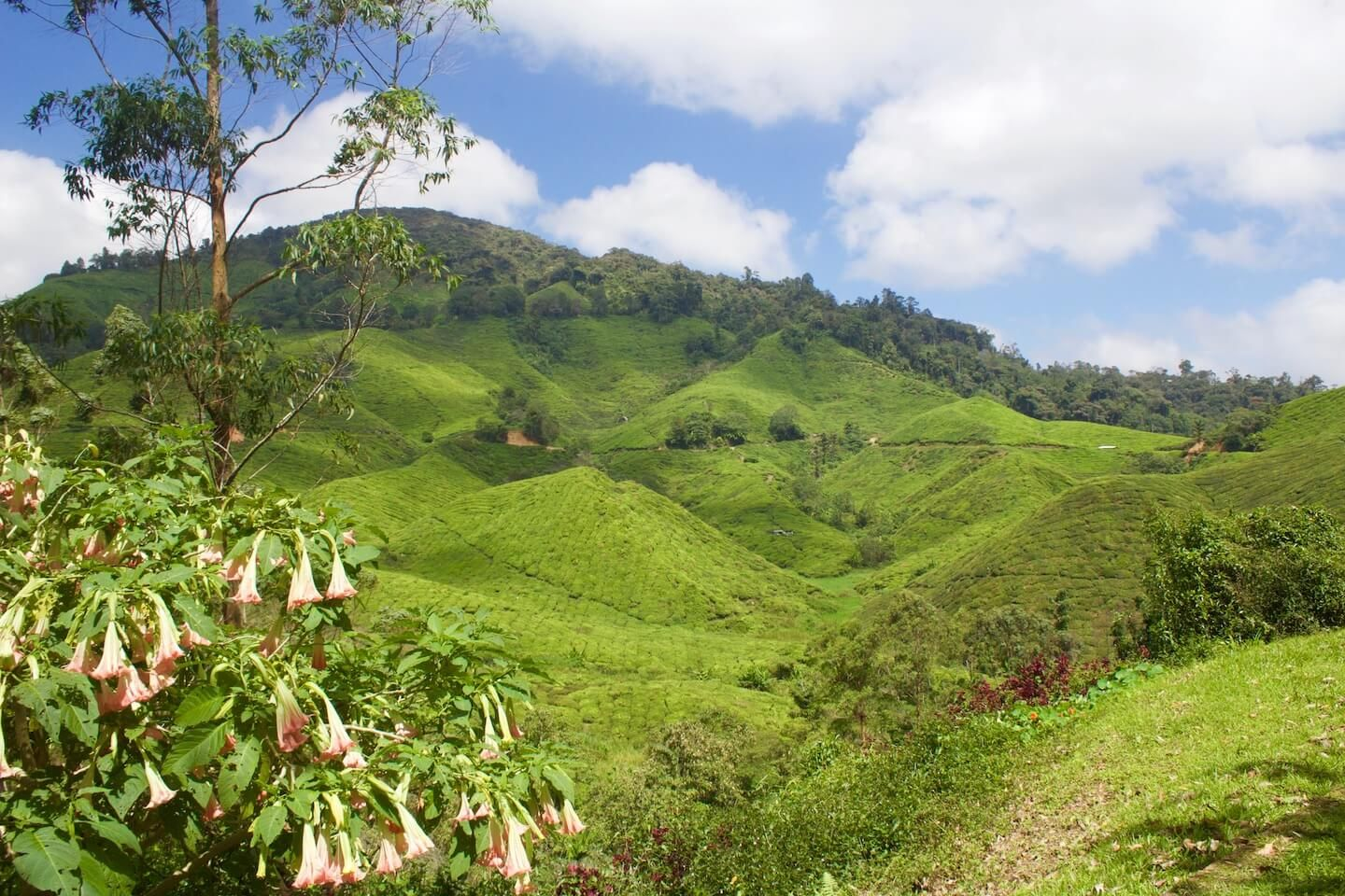 Cameron Highlands What to See & What to Skip
