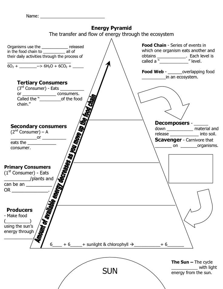 Image result for energy pyramid worksheet middle school | School ...