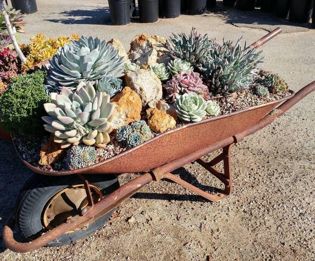 Carretilla Decoradas Con Suculentas Y Piedras Suculentas Succulentavenue Jardin De Cactus De Exterior Carretas Para Jardin Carretillas
