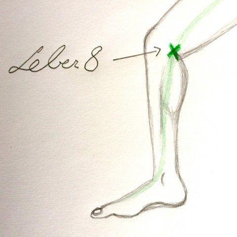 Holz 6: Wie du mithilfe des Leber-Meridians und seiner wirkungsvollsten Akupunkturpunkte deine Gesundheit stärken kannst