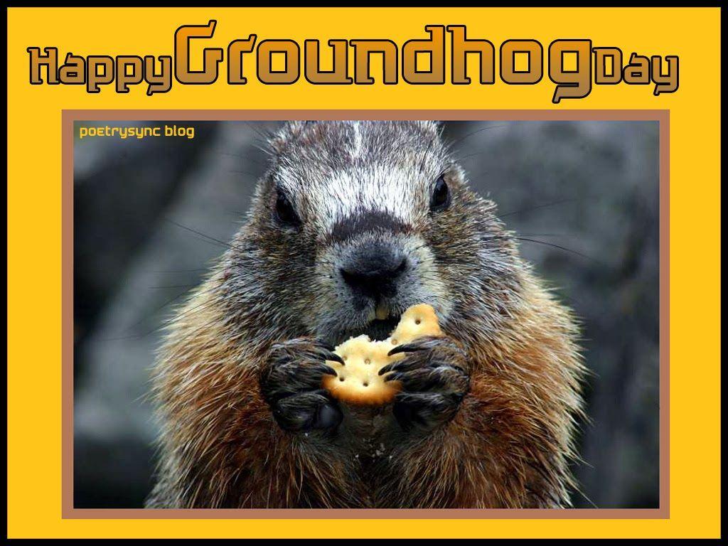 Groundhog day wishes card ecard free groundhog eating biscuit with groundhog day wishes card ecard free groundhog eating biscuit with quotes messages m4hsunfo