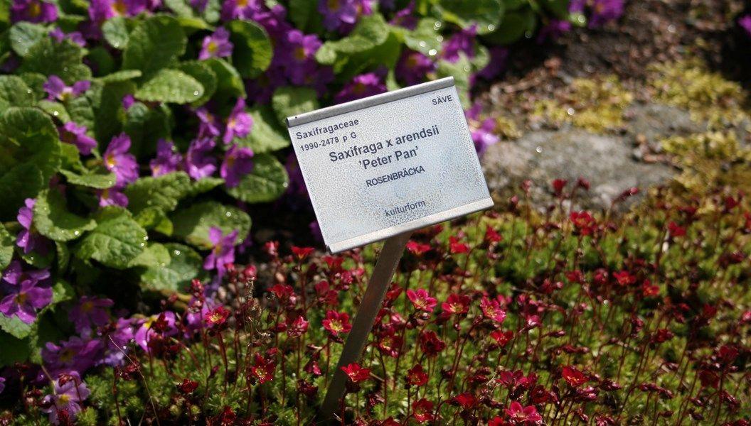 Växternas namn - varför latin?