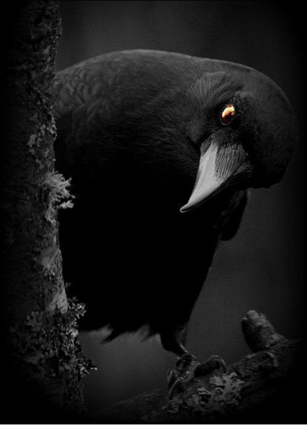 Pin by Kristina Hanna on I Love Birds! in 2020 Animals
