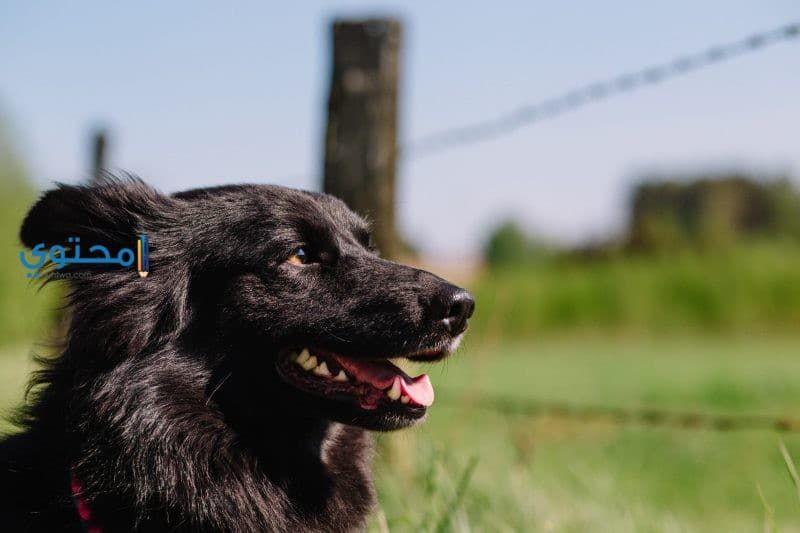تفسير رؤية الكلب فى حلم المتزوجة والعزباء والحامل In 2020 Dog Training Easiest Dogs To Train Online Dog Training