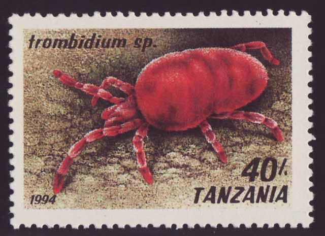 In The Gambia they call red velvet mites the sons of the rain, because they come…