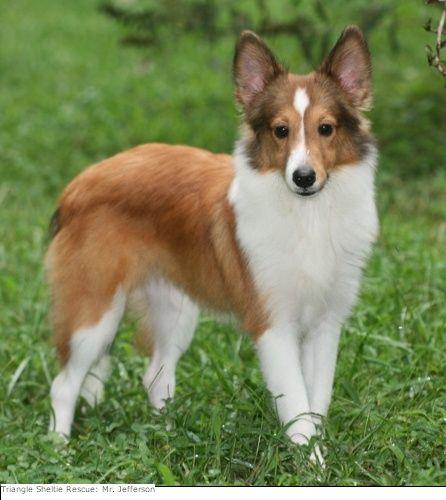 Raleigh Durham Dog Rescue