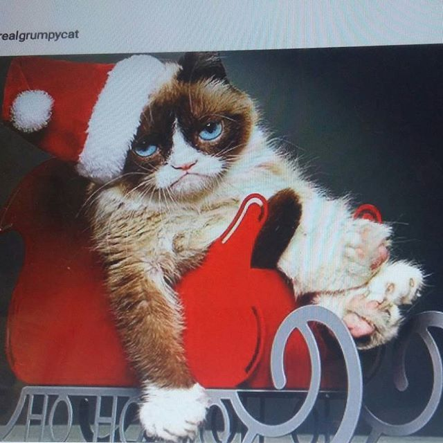 Ho ho ho...MERRY&PEACE CHRISTMAS Time to ALL. Lovely&World FAMOUS CAT ❤....ME Mornings&Tired...LOL Have NICE&ENJOY Christmas time. SEE U....SMILE @realgrumpycat #blog #cats  #cat #world #famous #lovely #love #enjoy #christmas #time #peace #lol #merrychristmas ❤☺