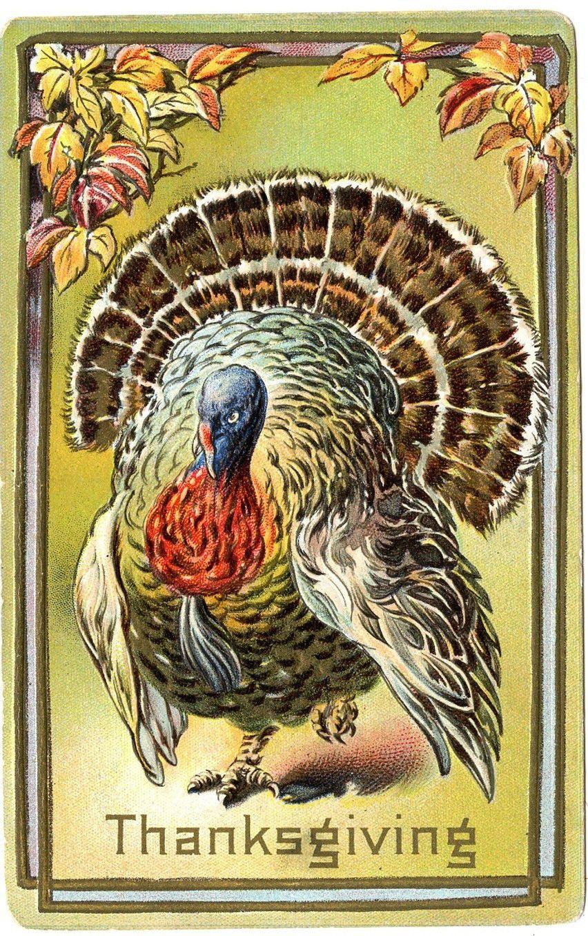 B0370 Antique Thanksgiving Postcard Turkey Fall Foliage