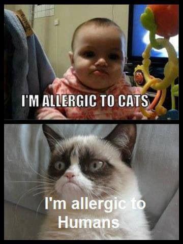414c5672ba3d1f752f3ee8a05d40feda i'm allergic to humans too grumpy cats pinterest grumpy cat