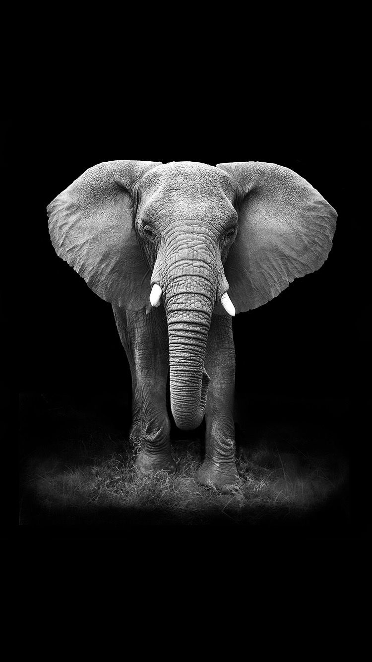 TAP AND GET FREE APP ⬆️ An elephant on a black background wallpaper for iPhone 7 plus from ...