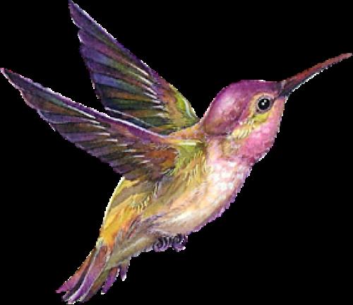 Pin By Angềlique La Mส Rguisề On Zhivotnye Klipart Hummingbird Painting Humming Bird Art Hummingbird Art