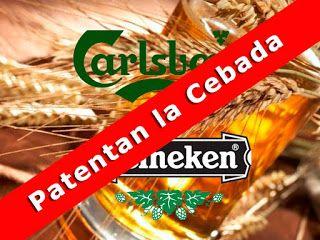 Todo Cerveza : Heineken  y Carlsberg pretenden imponer patente en...