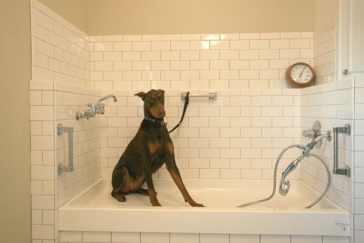 dog spa. That's just like my snoop #dogwash