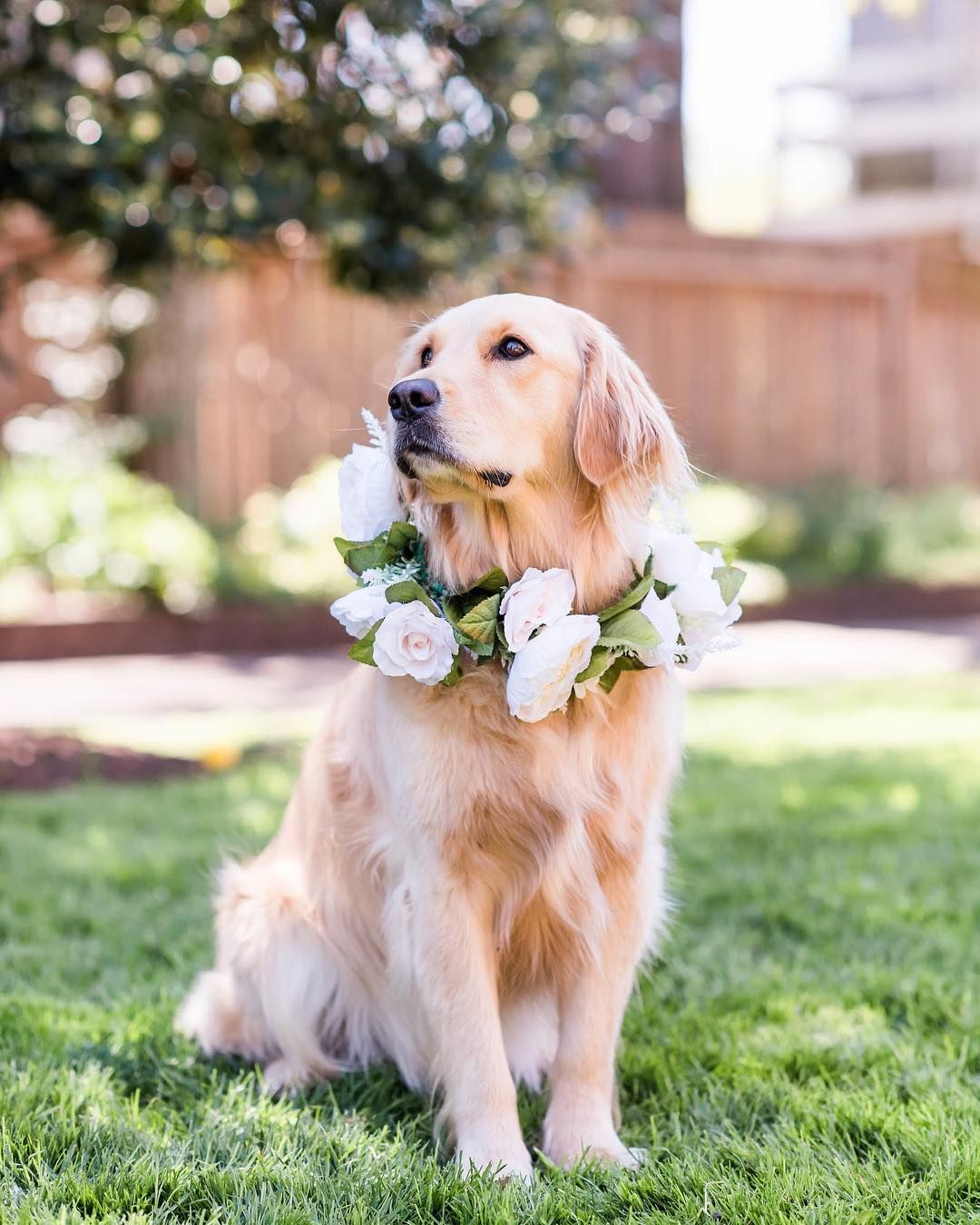 Charleston Weddings Southern Weddings Golden Retriever On The
