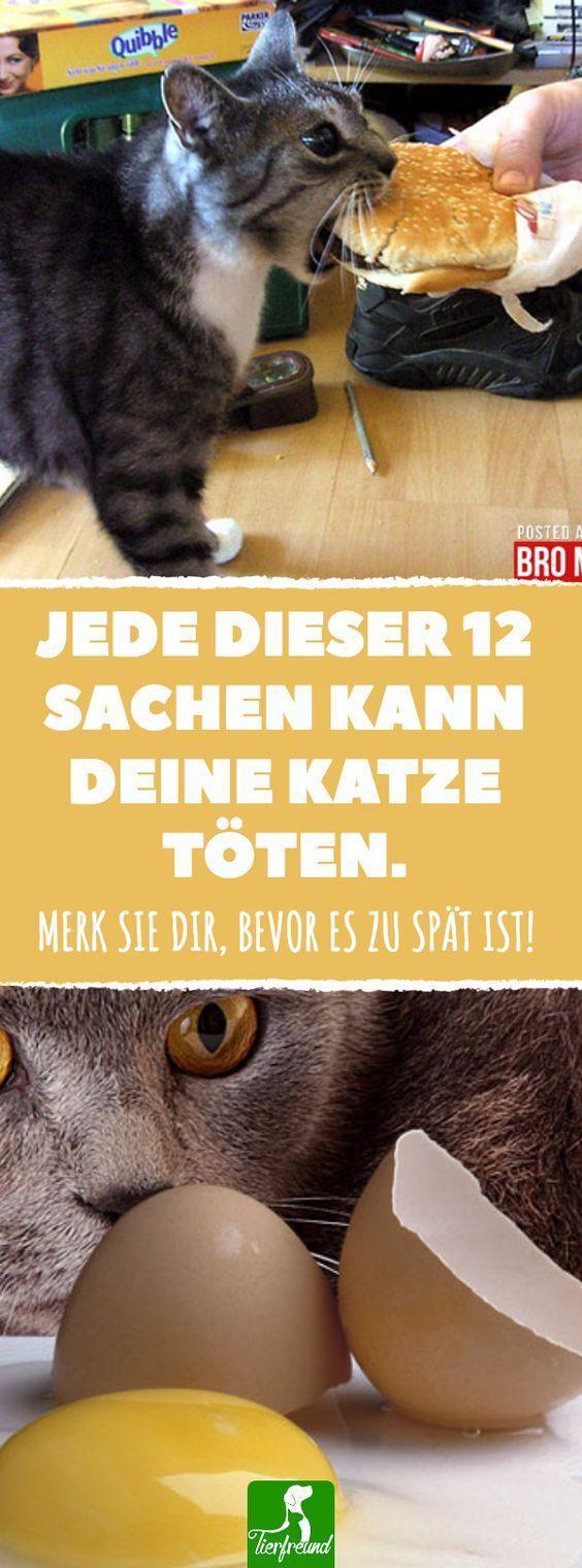Diese Liste ist wirklich wichtig, wenn du eine Katze hast! #tierfreund #tiere #katzen #ratgeber #gesundheit #leben #essen #trinken #füttern #lebensmittel #gefahr #eier #milch #knochen #kaffee #tee #katzengeburtstag