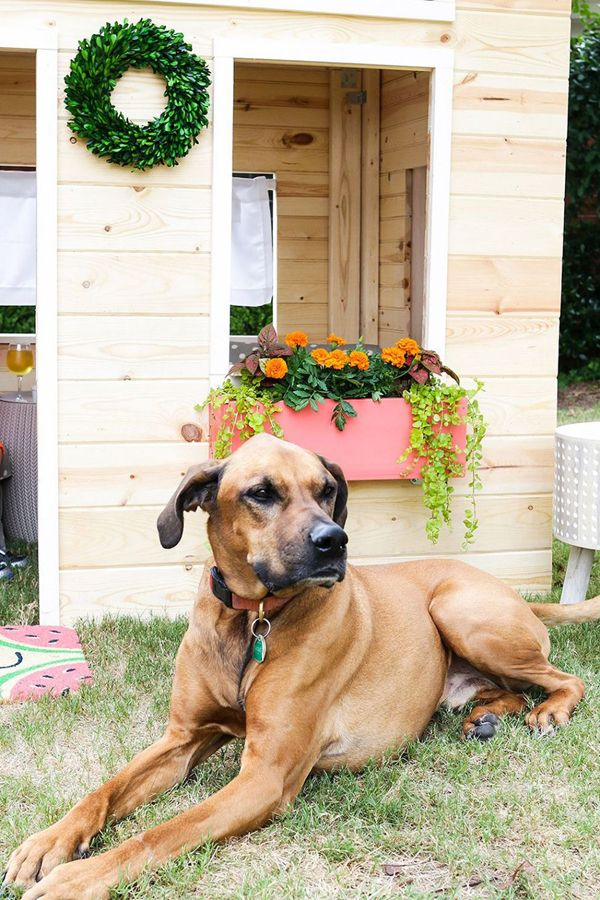 20 Creative DIY Dog Playground In The Backyard Home