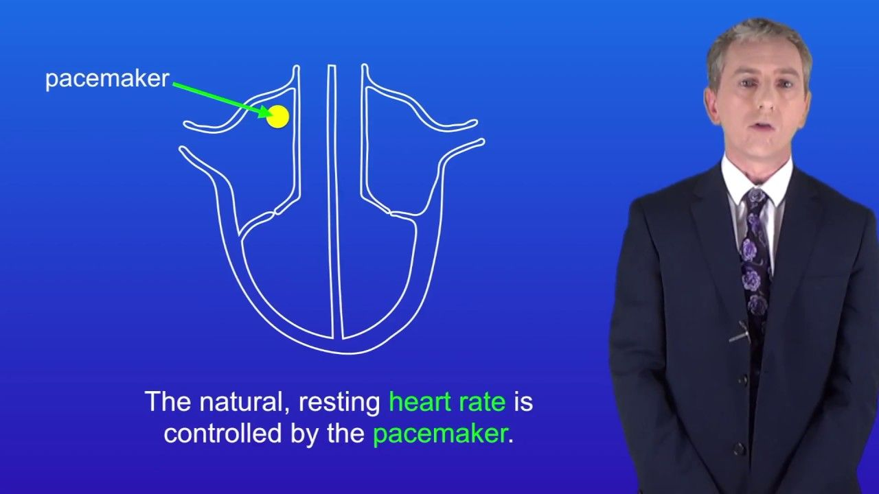 GCSE Science Biology (9-1) The heart and circulation ...